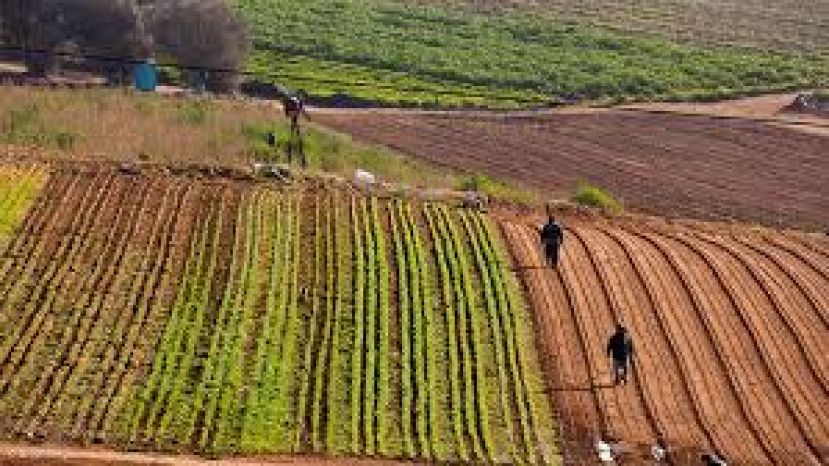 South Africa's local agricultural industry proves to be most enterprising in acclimatising to challenges as they arise.